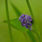Blissful Blur by BaliBuddha
