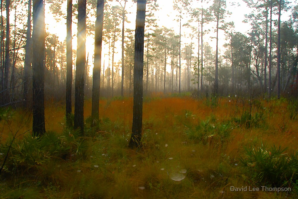 """""""Misty Morning"""" by David Lee Thompson"""