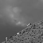 Wild Ponies by Laura Puglia