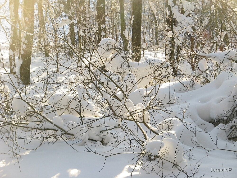 WINTER DAY IN FOREST. by JurmaleP