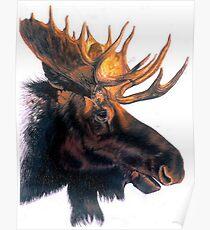 Bullwinkle Poster