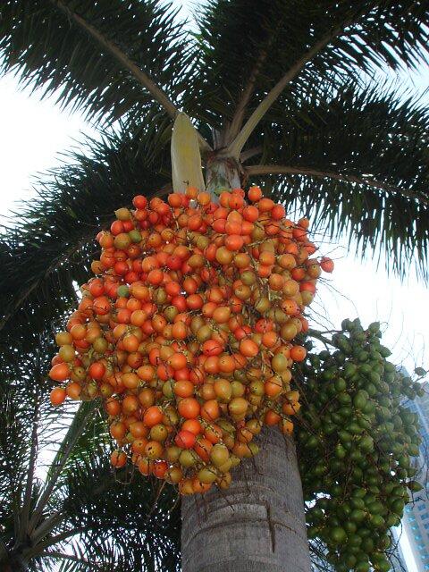 Coconuts by Dario  da Silva