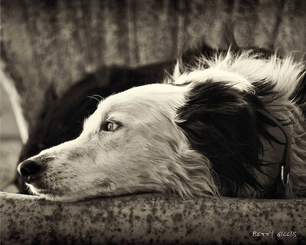 Dreaming of ewe by Texas Sheepdogs