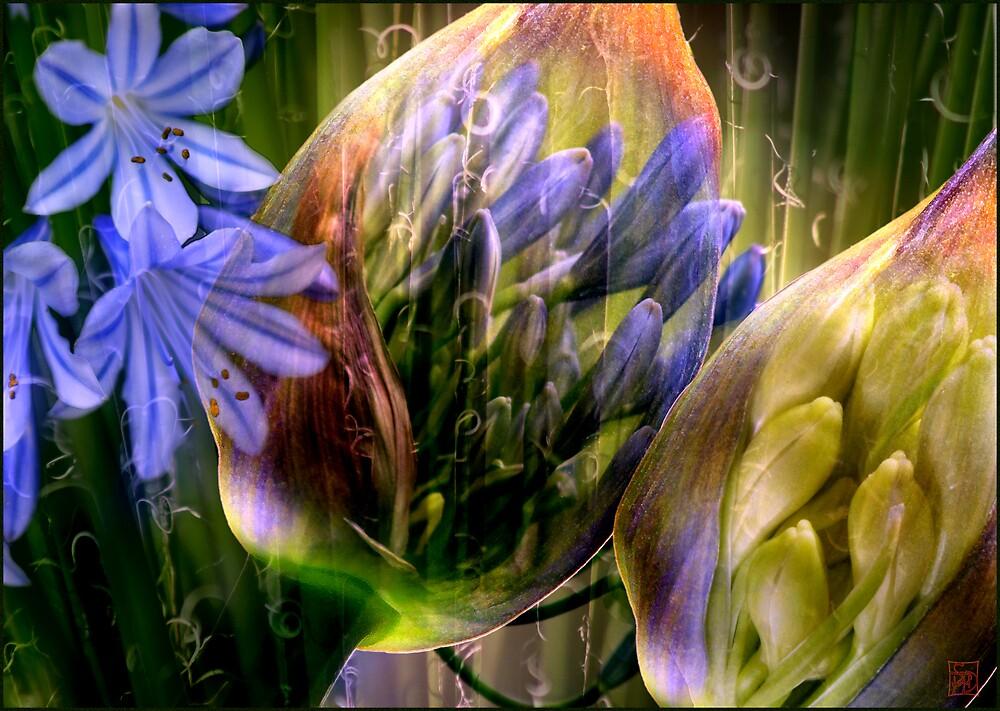 Metamorphosis 2 by Sabine Spiesser