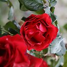 Roses Are Red by Tiffany Selzer