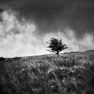 Single Tree on Dartmoor by Dave Hare