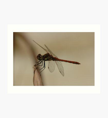 dragonfly near pool Art Print
