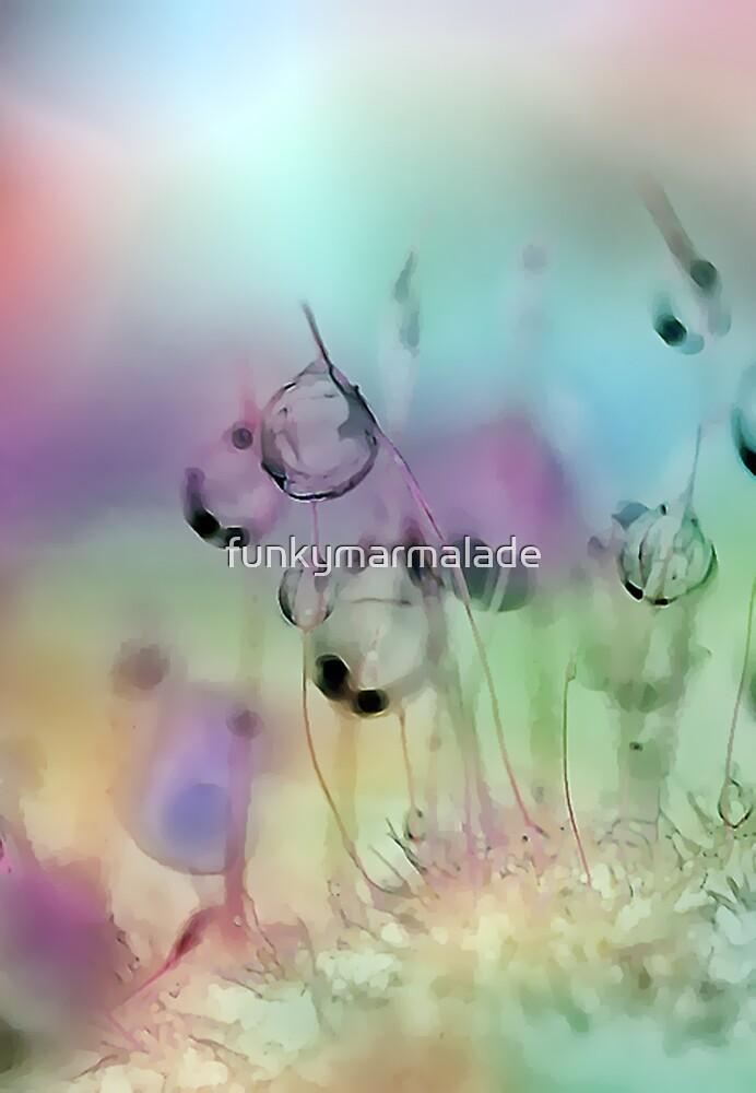 fairy lanterns by funkymarmalade