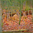 Deer in Deerfield, Illinois by Sandra Guzman