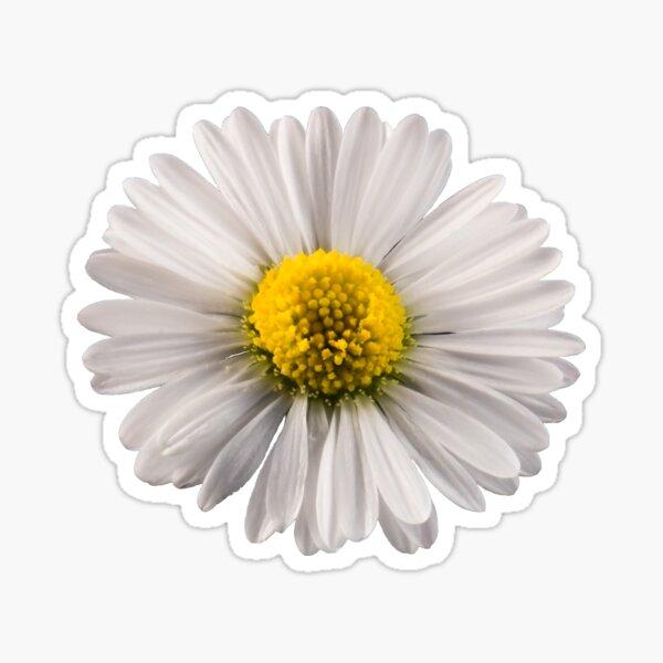 Single Daisy Sticker
