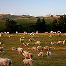 Golden Fleece by Janine  Hewlett