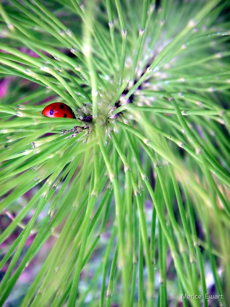 """Ladybug ladybug fly away home"" by Merice  Ewart-Marshall LFA"