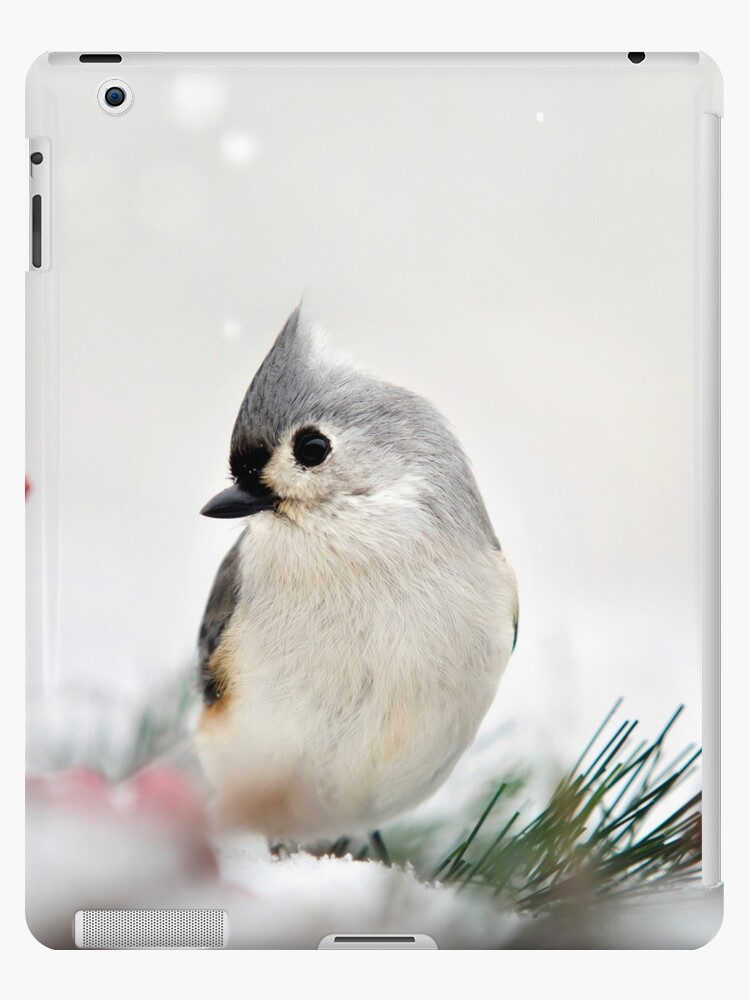 Tufted Titmouse Bird in Snow by Christina Rollo