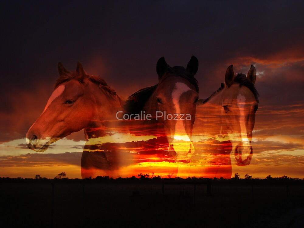 Sunset Dreaming by Coralie Plozza