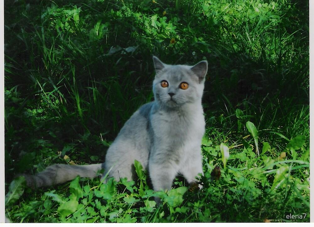 a lovely pet by elena7