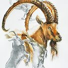 Alpine Ibex by BarbBarcikKeith