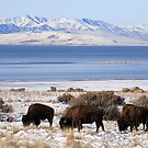 Bison Winter by Gene Praag