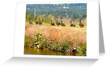 Canadian Geese by lindasdreams