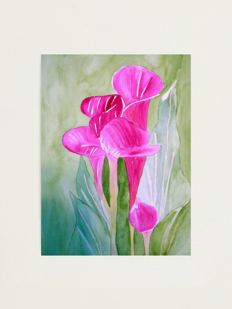 Alternate view of Calla Lily Photographic Print