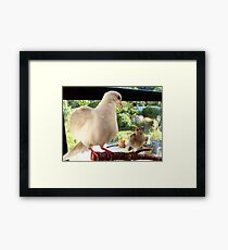 Feed YOU? ... You Must Be Joking! - Dove & Sparrow - NZ Framed Print