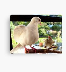 Feed YOU? ... You Must Be Joking! - Dove & Sparrow - NZ Canvas Print