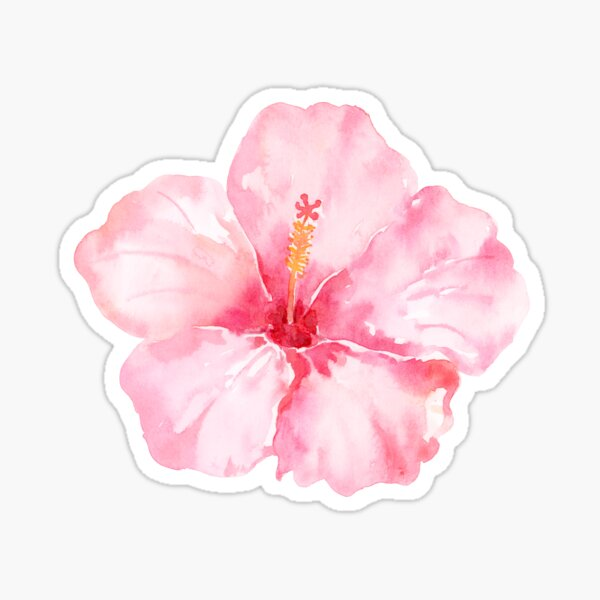 Peach Pink Hibiscus Tropical Flowers Sticker