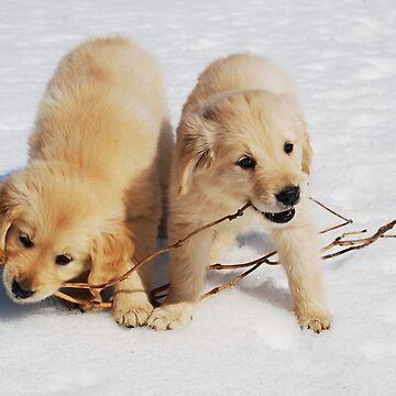 Puppies in Winter by LaurieMinor