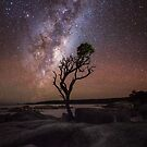 Resilience - Lone tree under the Milky Way by James Stone