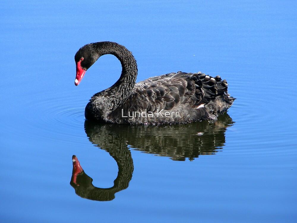 Me A Swan? aw C'mon  by Lynda Kerr