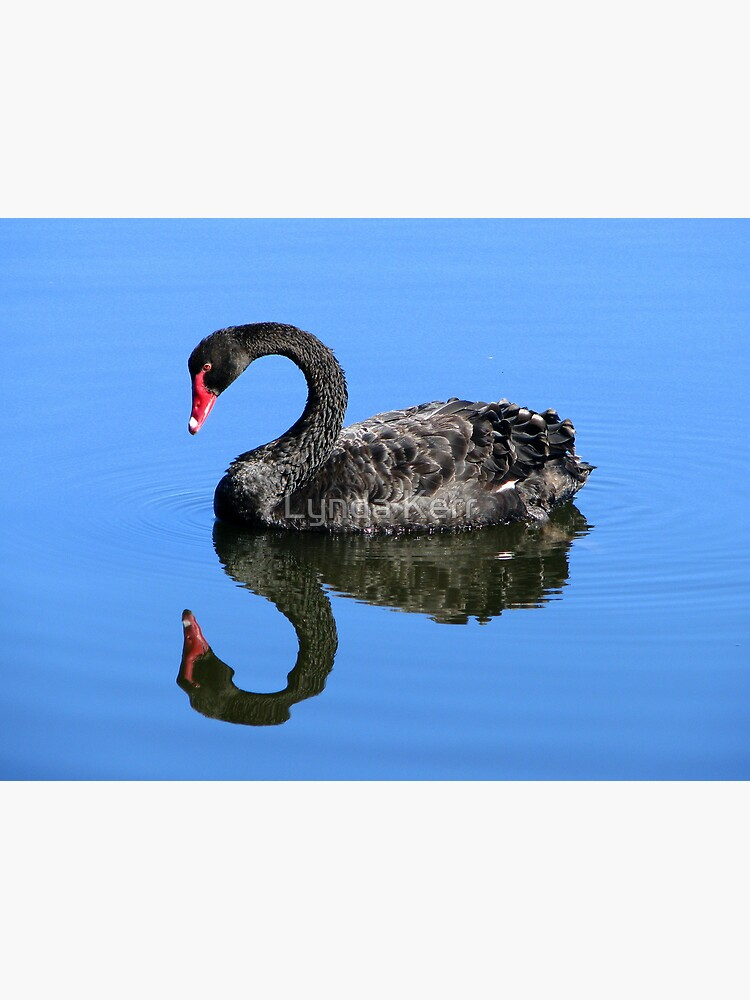 Me A Swan? aw C'mon  by 4sure