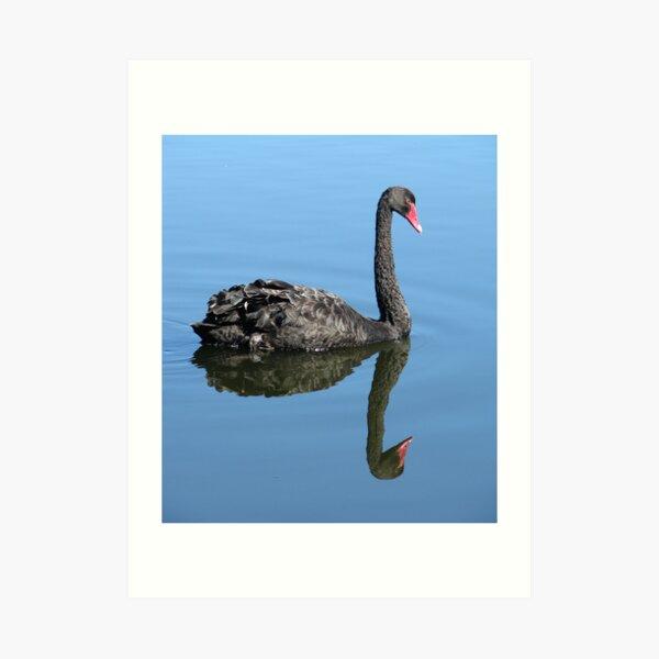 Not Such an Ugly Duckling. Art Print