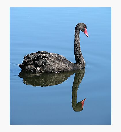Not Such an Ugly Duckling. Photographic Print