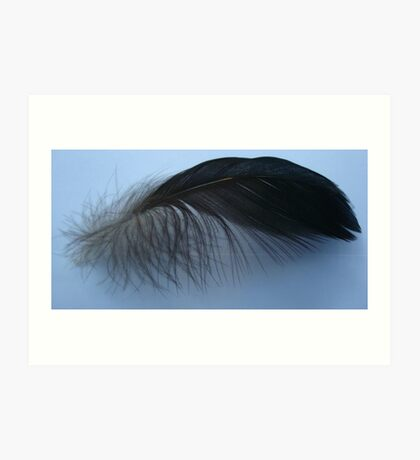 Muscovy feather Art Print