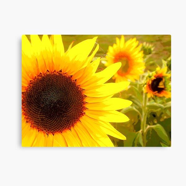 Sunflowers Waking Canvas Print
