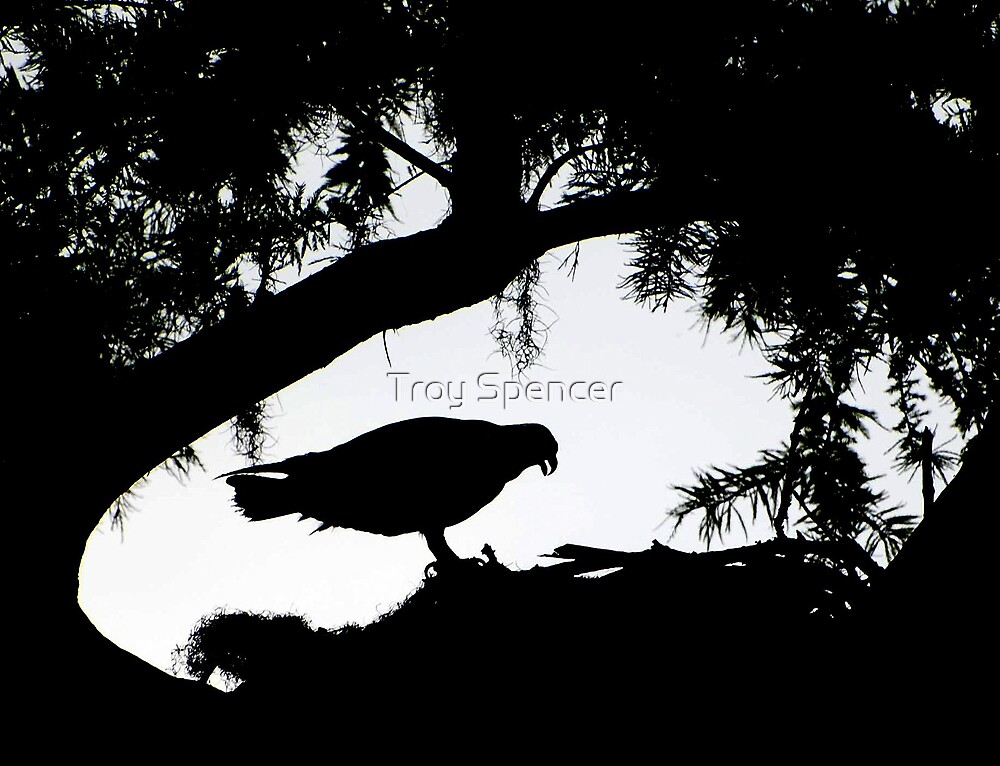 osprey silhouette by Troy Spencer