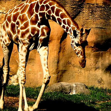 Giraffe by ktbezzi