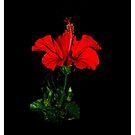 tropical flower by UncaDeej