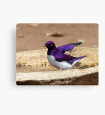 Nature Used Only The Best Paint - Violet-Backed Starling - SA Canvas Print