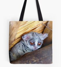 Hush Now... We're Trying To Sleep - Bushbaby - South Africa Tote Bag