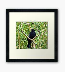 Black Crown in Tree Framed Print
