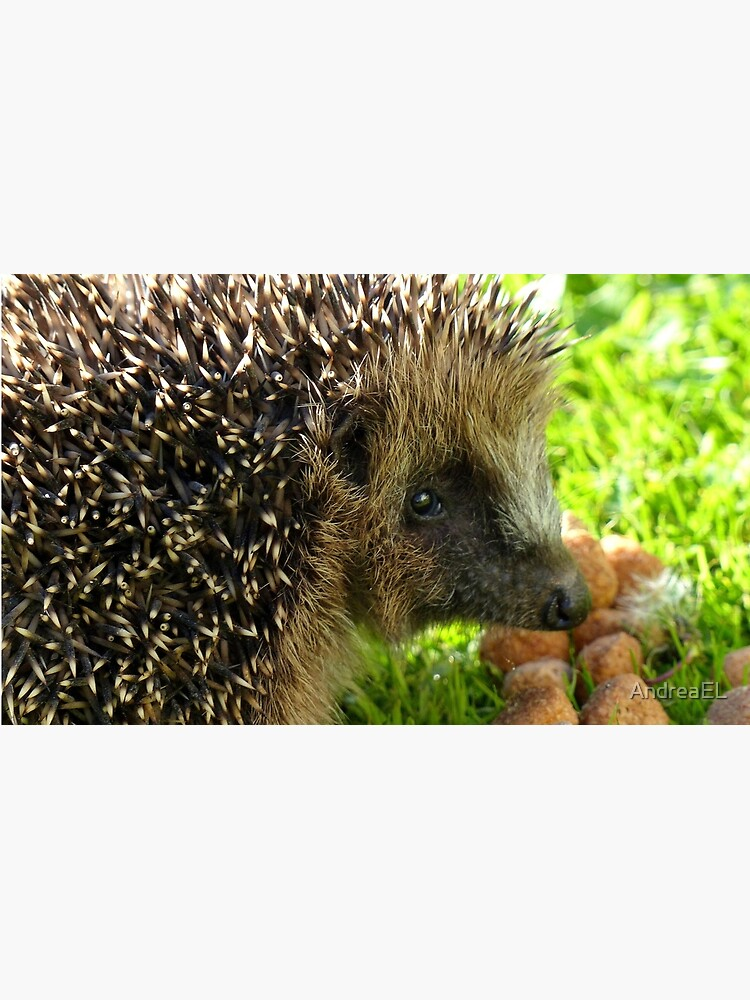 Thank You... You Saved My Life... - Hedgehog - NZ von AndreaEL