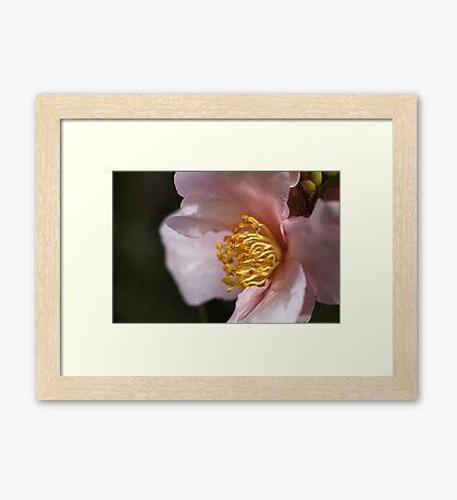 Dream Time Camellia Framed Print