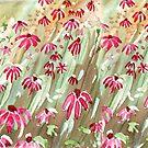 Daisy fields by Maree Clarkson