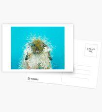 Hairy Scary Rabbit Postcards