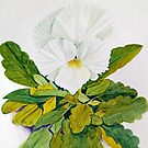 White Pansy by marlene veronique holdsworth