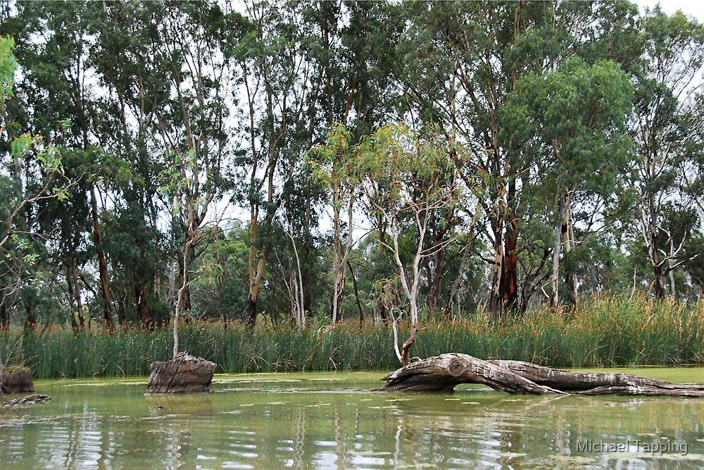 Murray River - Renmark - South Australia by Michael Tapping