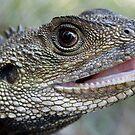 Eastern Water Dragon  by Mette  Spange