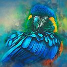 Macaw Magic by Brian Tarr