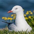 A seagulls life 001 by kevin chippindall