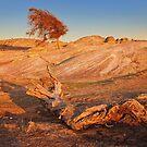 0315 Dog Rocks remains by Hans Kawitzki
